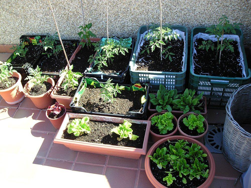 C mo hacer un huerto urbano panorama agrario - Como hacer un huerto urbano ...