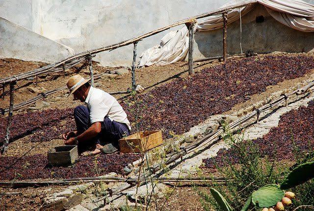 pasa de uva