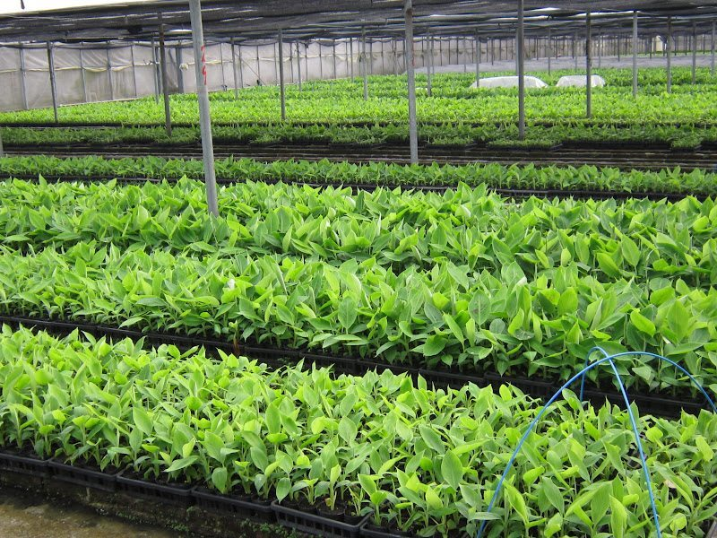 Vivero de plantas busca revertir d ficit de reas verdes for Viveros en jalisco