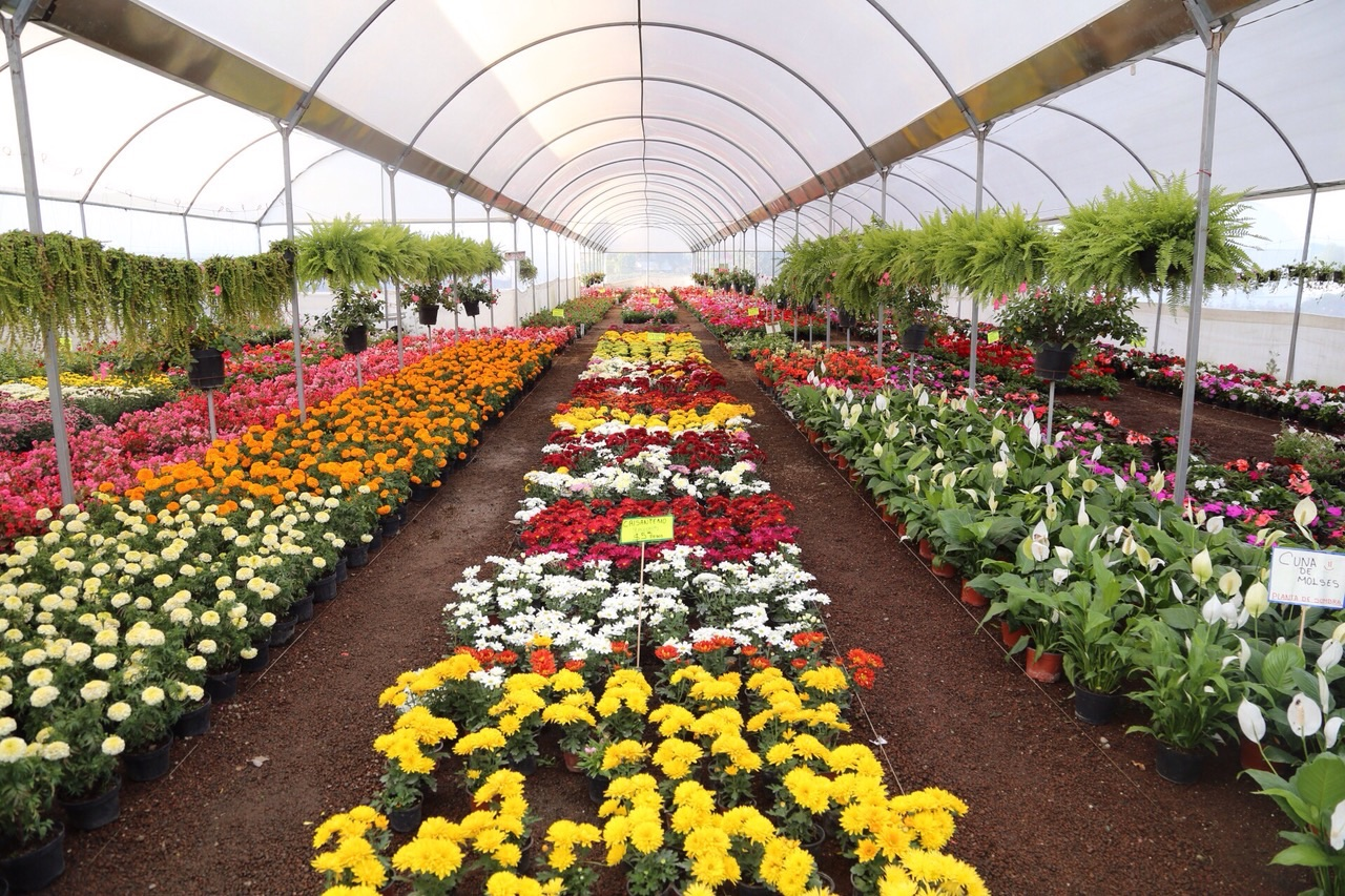 Viveristas de atlixco puebla ofertar n 30 mil plantas en for Viveros de plantas